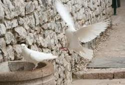 Spiritual Meditation & Mindfulness Retreats in Assisi, Italy, Europe doves photo