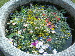 Spiritual Meditation & Mindfulness Retreats in Assisi, Italy, Europe flowers in water photo