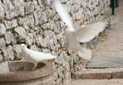 Spiritual Meditation & Mindfulness Retreats in Assisi, Italy, Europe doves photo 2